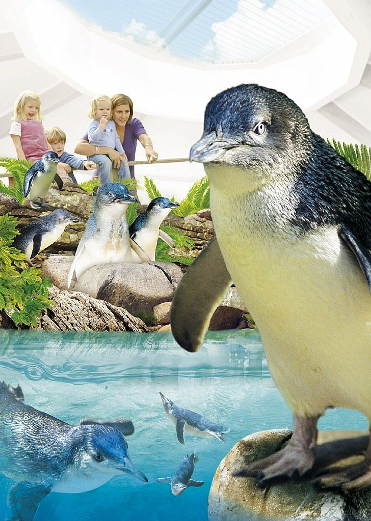 penguin party at manly sea life sanctuary manly. Black Bedroom Furniture Sets. Home Design Ideas
