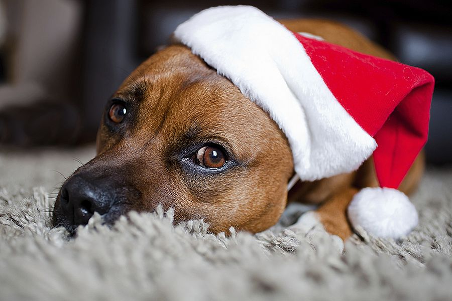 Festive Foods for your Pets to Avoid