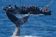 Whale Watching Season is on NOW!