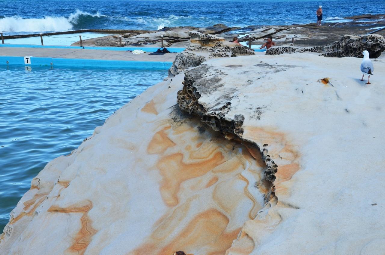 Dee Why Ocean Pool - Image ©2014 ManlyAustralia.com