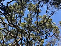 Plan to Protect and Enhance Northern Beaches' Precious Urban Tree Canopy