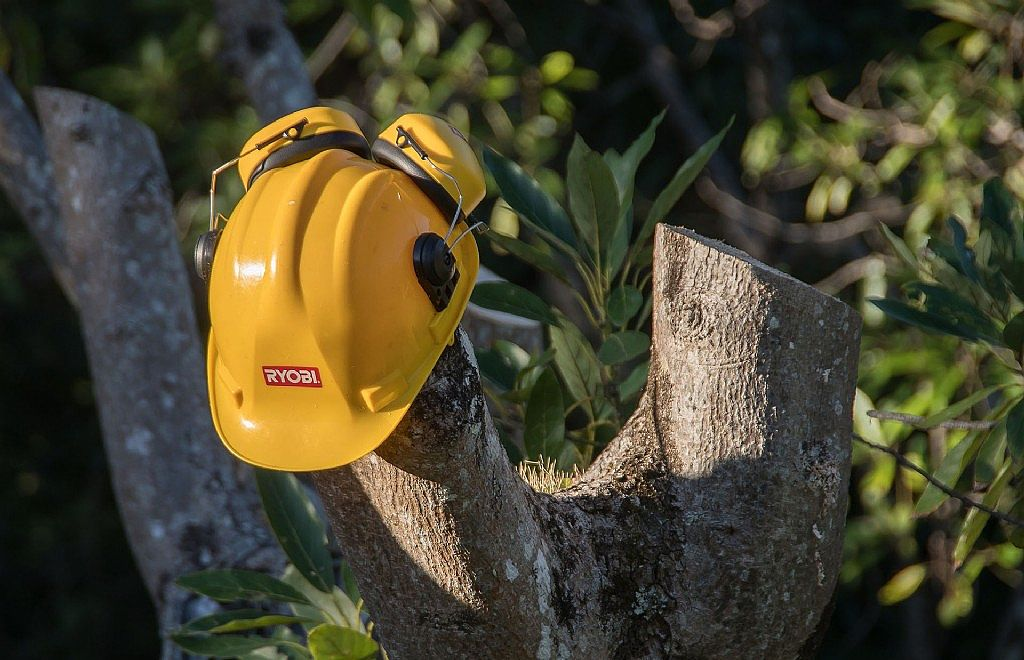 Council Issues Warning to Beware of Suspect Tree Operators